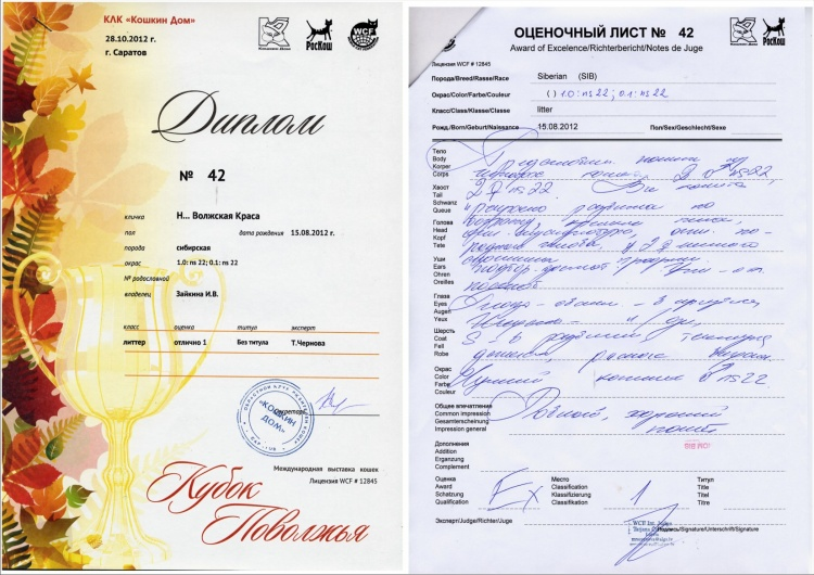 Диплом (Чернова)
