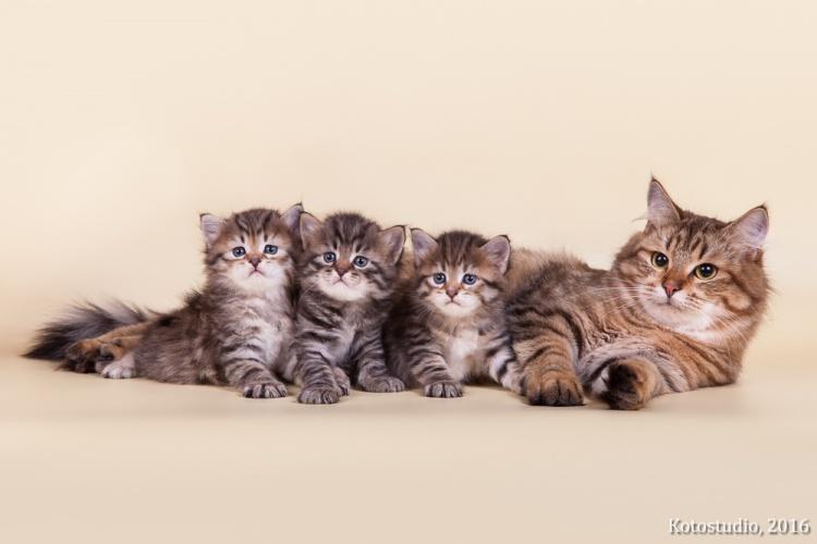 Котята помета Н вместе с мамой