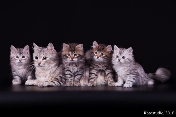 Котята помета А с мамой