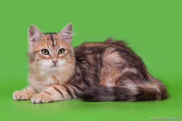 Мачо Волжская Краса