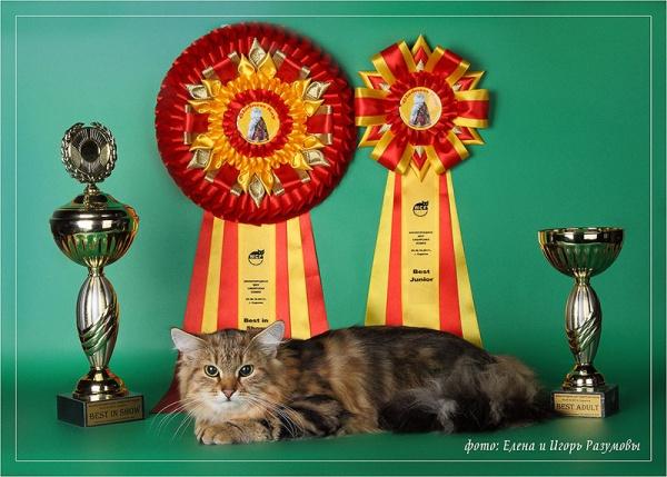 Пелагея - победитель монопородного шоу