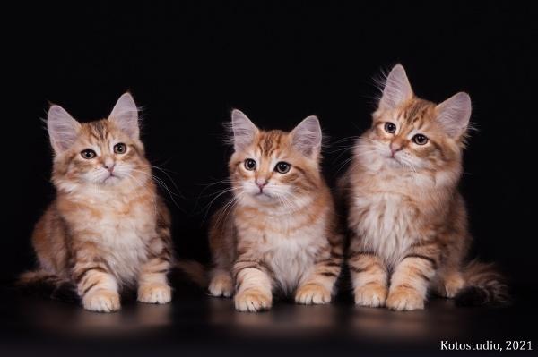 Помет У, все котята вместе