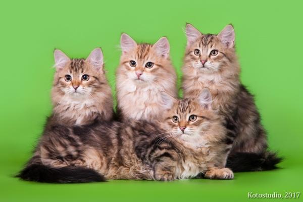 Котята помета М вместе