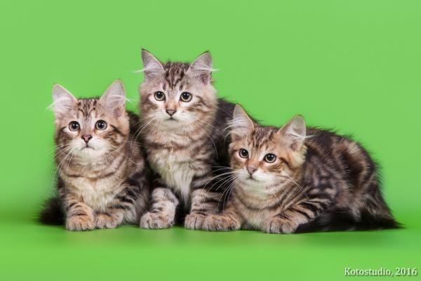 Общее фото, котята З